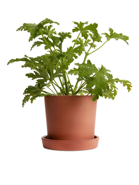 Terracotta Flower Pot, Medium