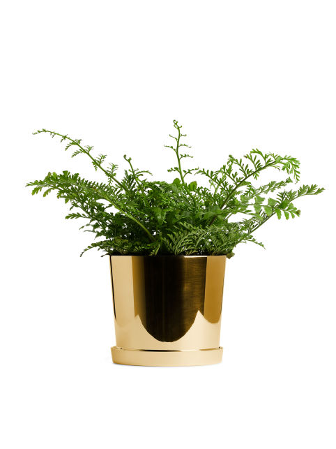 Brass Flower Pot, Medium
