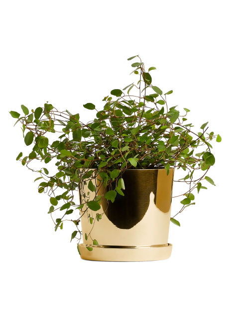 Brass Flower Pot, 11 cm